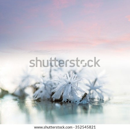 Close up of  ice crystals on small plant on ice on lake in winter, with purple sky in background - stock photo