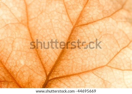 Close up of intricate vein patterns on dried leaf - stock photo