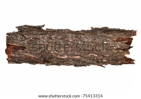 Close-up of isolated broken stub log bark with wooden texture isolated on white background - stock photo