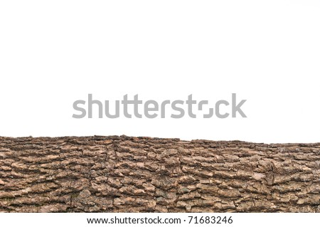 Close-up of Isolated stump/ stub with wooden crust texture - stock photo