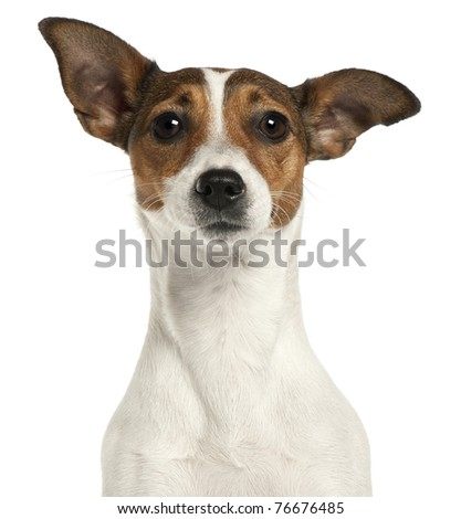Close-up of Jack Russell Terrier, 2 years old, in front of white background - stock photo