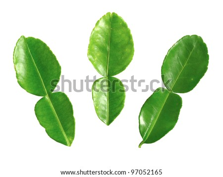 close up of kaffir lime leaves on white - stock photo
