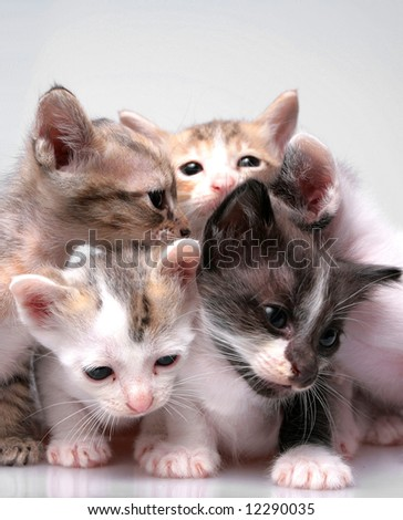 Close up of kittens family isolated on white background - stock photo
