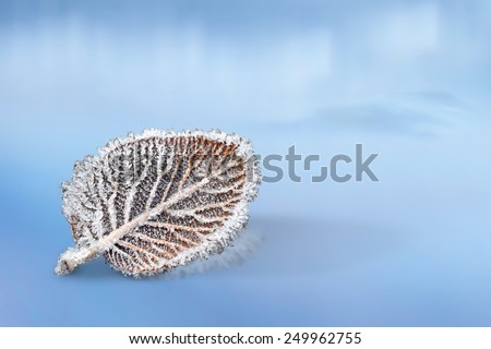 Close up of leaf with ice crystals on ice  - stock photo