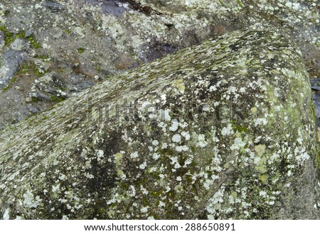 Close up of  lichen on the rocks in the mountains  - stock photo