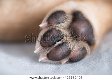 Close Up of Light Colored Puppy Paw - stock photo