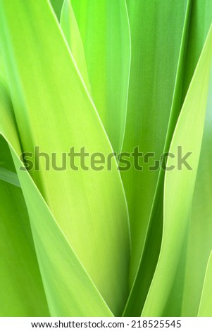 Close up of  lily  leaf