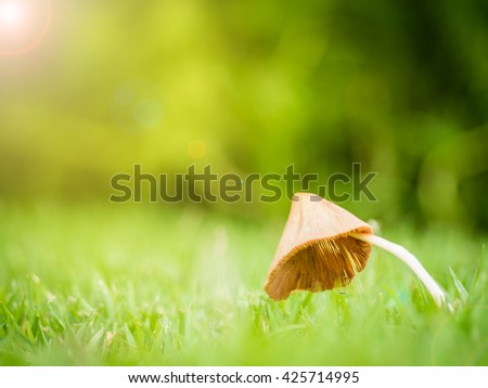 Close up of little mushroom look like umbrella with dew in garden on the sunlight morning and lens flare effect, Shallow depth of field, Copy Space, Side View - stock photo