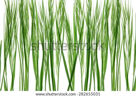 Close Up of Long Glass - stock photo