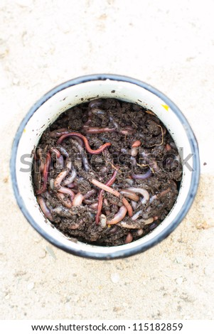 Close-up of lots of earthworms in the dirt - stock photo