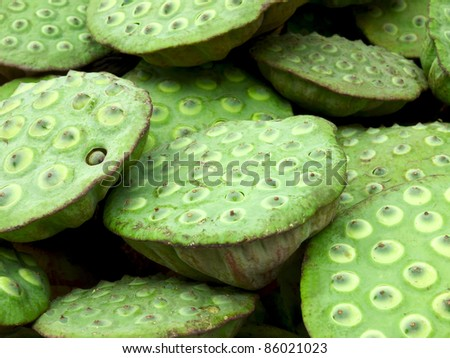 close up of lotus seed pods - stock photo