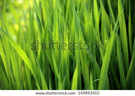 close-up of lush green grass in summer - stock photo