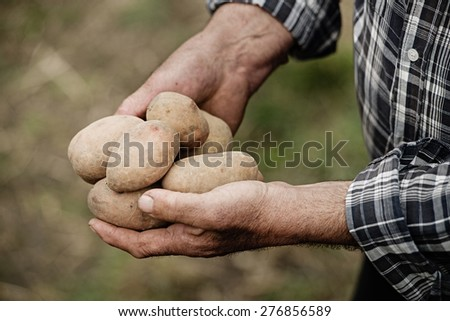 Close-up of male hands holding a potato on a background of the vegetable garden - stock photo