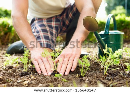 Close Up Of Man Planting Seedlings In Ground On Allotment - stock photo
