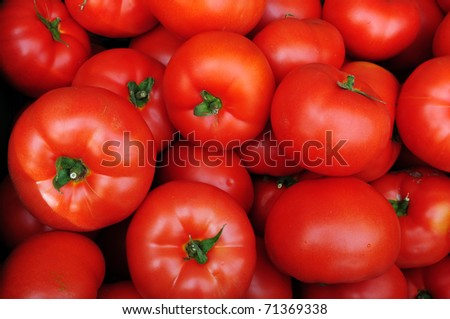 Close up of many fresh red tomatoes big fruit type. - stock photo