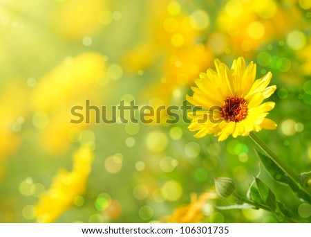 Close-up of  marigold flower - stock photo