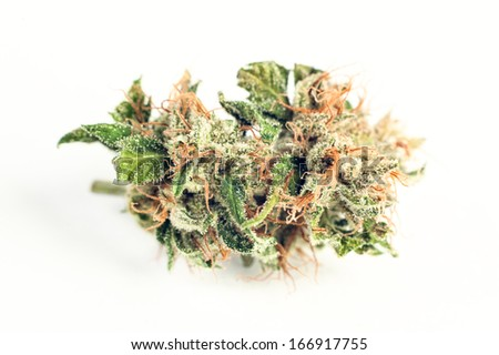 close up of medical marijuana in special handling - stock photo