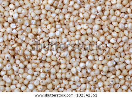 Close up of millet grain - stock photo