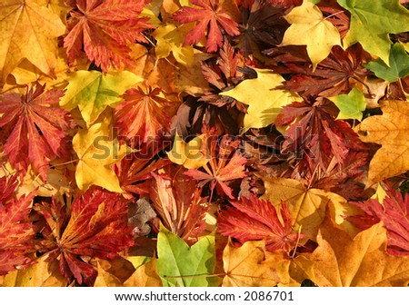 Close up of mixed Autumn Leaves - great color - stock photo