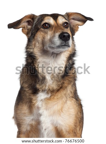 Close-up of Mixed-breed dog, 4 years old, in front of white background - stock photo