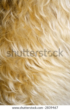 Close up of mixed breed dogs fur. - stock photo