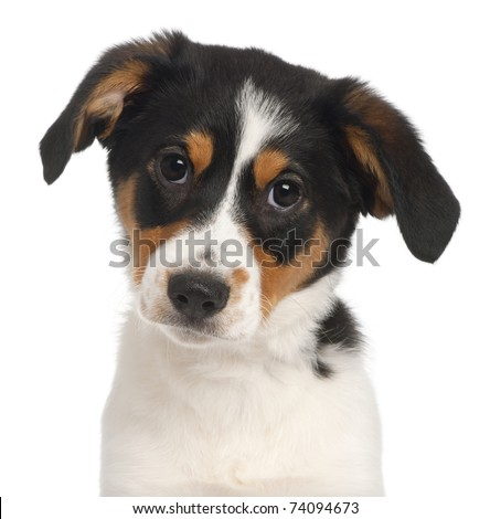 Close-up of Mixed-breed puppy, 2 and a half months old, in front of white background - stock photo
