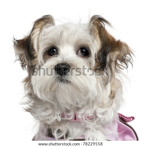 Close-up of Mixed-breed puppy, 5 months old, in front of white background - stock photo
