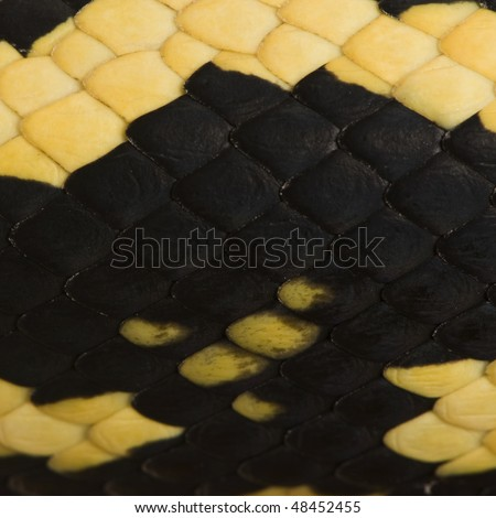 Close-up of Morelia spilota variegata snake scales, a subspecies of python - stock photo