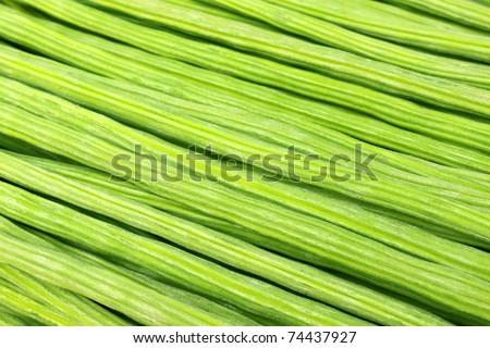 Close up of Moringa Oleifera or sonjna of Indian subcontinent - stock photo