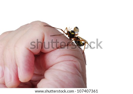 close-up of mosquito on hand - stock photo