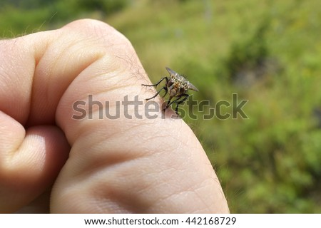 Close up of mosquito sucking blood - stock photo