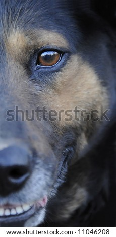close-up of my dog Don - beautiful eyes and face - stock photo
