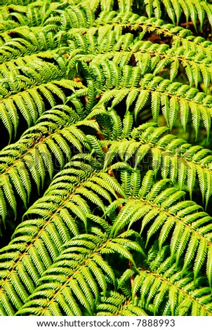 Close-up of native green fern in rainforest - stock photo