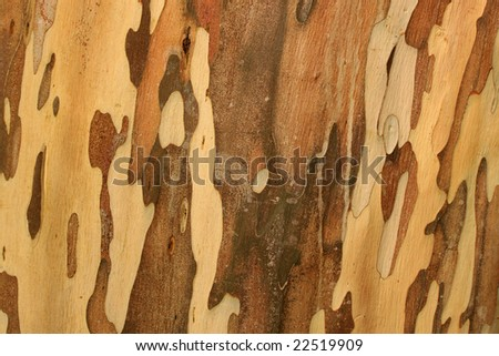 Close up of nature wood for background