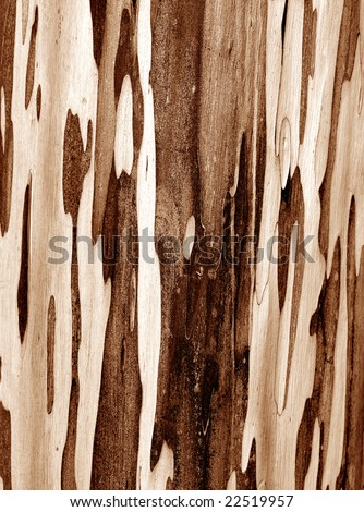 Close up of nature wood for background - stock photo