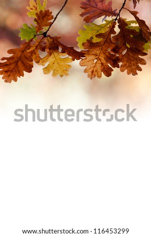 Close up of oak tree in autumn colors