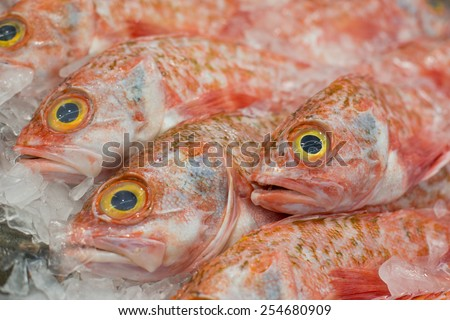 Close up of Ocean Perch on ice at the fish market, shallow depth of field - stock photo