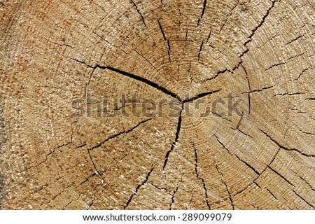 Close-up Of Old Pine Tree Rough Cross Section Background Texture With Many Growth Rings Circular Pattern