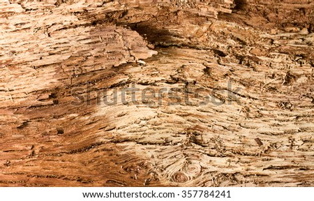 Close-up of old tree bark interior background - stock photo