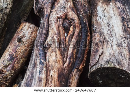 Close-up of old wooden logs