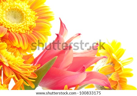 Close up of one red tulip and orange african daisy flowers - stock photo