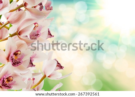 Close up of orchid flower - stock photo