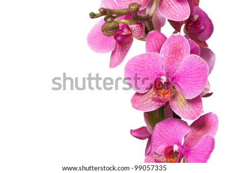 Close-up of orchid isolated on white background - stock photo