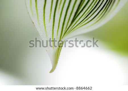 close-up of orchid petal on a blurred background