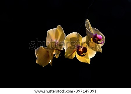 Close up of Orchids in the Garden - stock photo