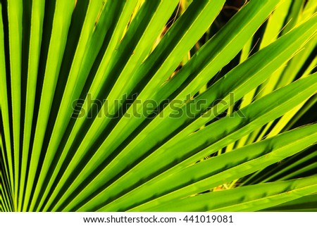 Close up of palm leaf detail