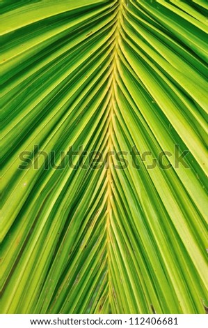 Close up of palm leave as background - stock photo