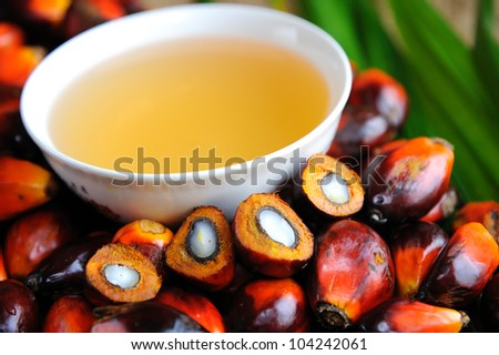 Close up of Palm Oil fruits, Cooking Oil and Leaf. - stock photo