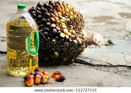 Close up of Palm Oil seeds and cooking oil, selective focus. - stock photo
