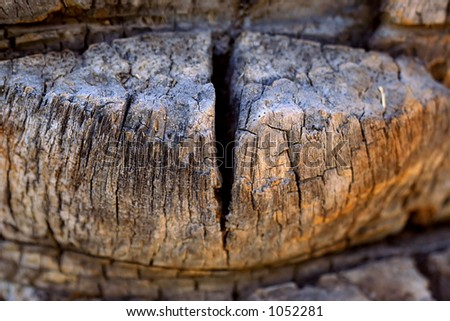 Close up of palm trees bark texture